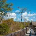 Big Cypress National Preserve Florida