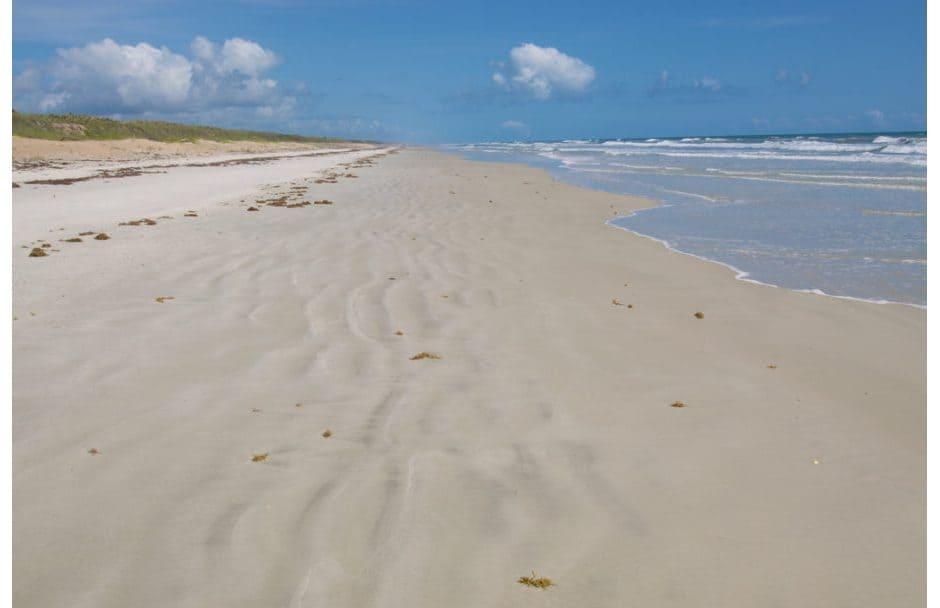 Canaveral National Seashore Beach Florida