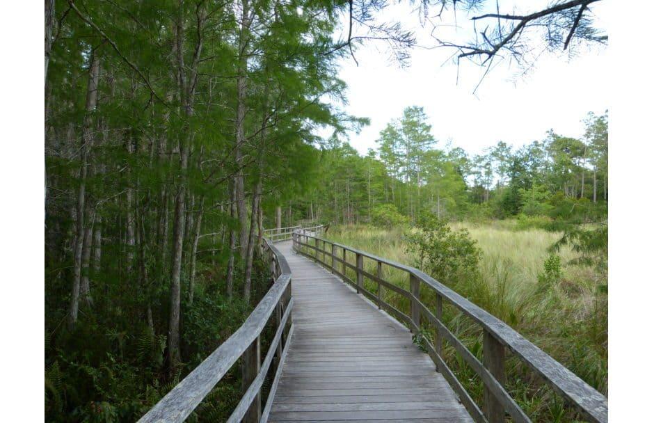 Corkscrew Swamp Sanctuary Florida