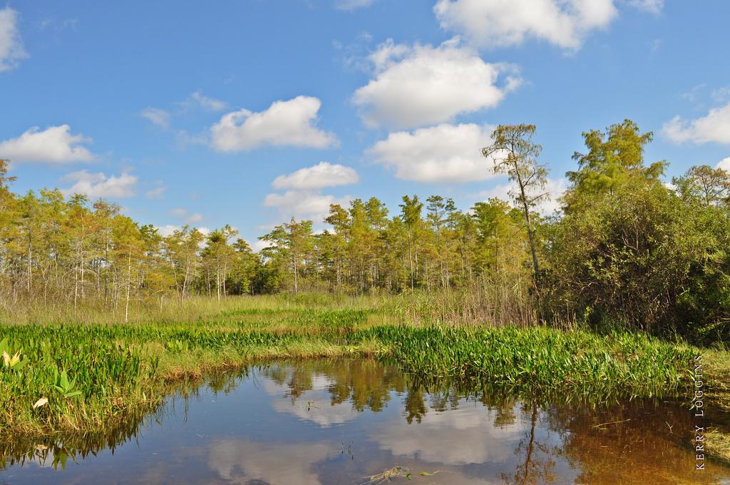 Natur von Florida