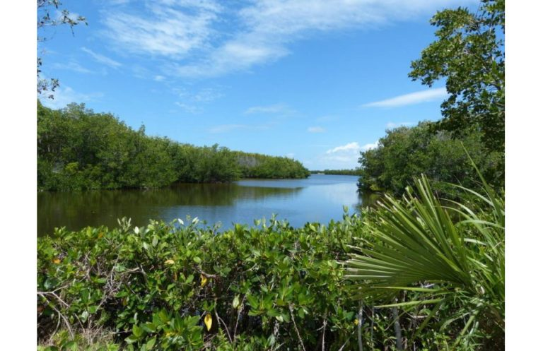 """J. N. """"Ding"""" Darling National Wildlife Refuge Florida"""