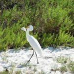 Lighthouse Beach auf Sanibel Island Florida