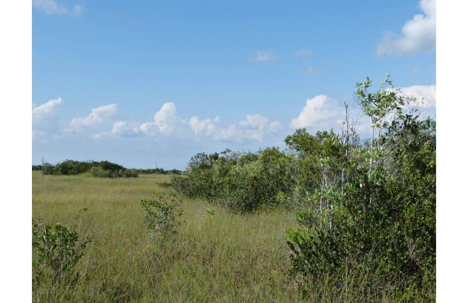 Shark Valley – Everglades National Park Florida