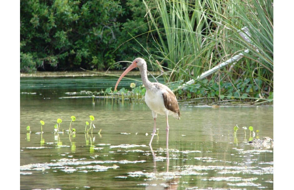Weeki Wachee Springs State Park Florida