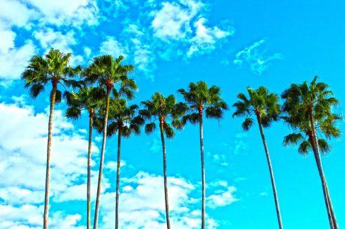 Palmen Florida